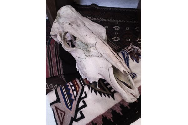 600x400--skull-and-rugs--social